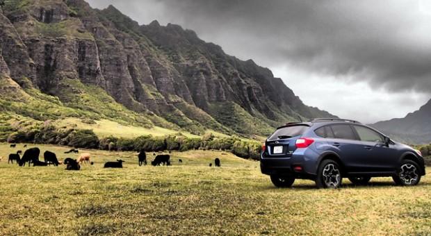 Grupurile Levi şi Shlomo vor să preia importatorul Subaru în România